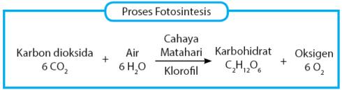 proses fotosintesis