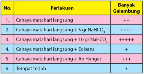 tabel hasil pengamatan Ingenhousz