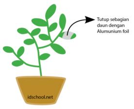 uji fotosintesis