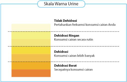 Skala Warna Urine