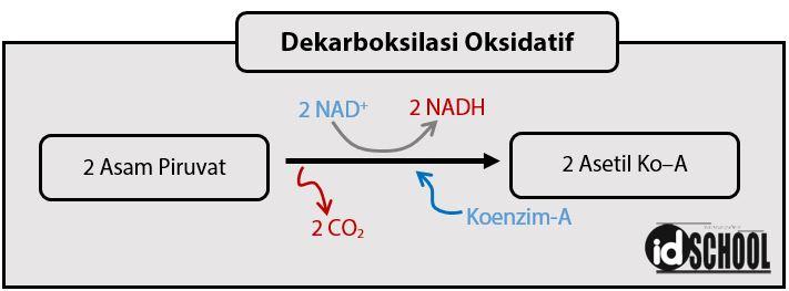 Dekarboksilasi Oksidatif