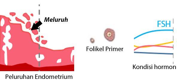 Fase Menstruasi - Fase Pendarahan