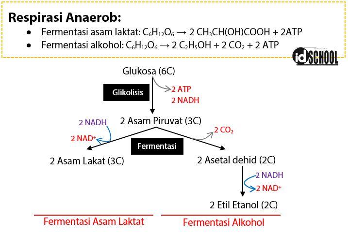 Bagan Respirasi Anaerob