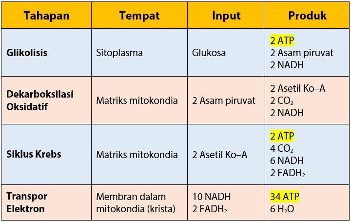 Tabel Hasil 4 Tahapan Respirasi Aerob
