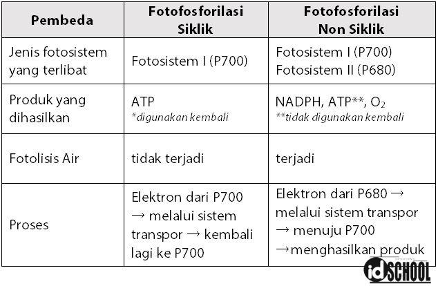 Tabel Perbedaan Fotofosforilasi Siklik dan Fotofosforilasi Non Siklik
