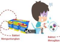 Peran Bakteri dalam Kehidupan