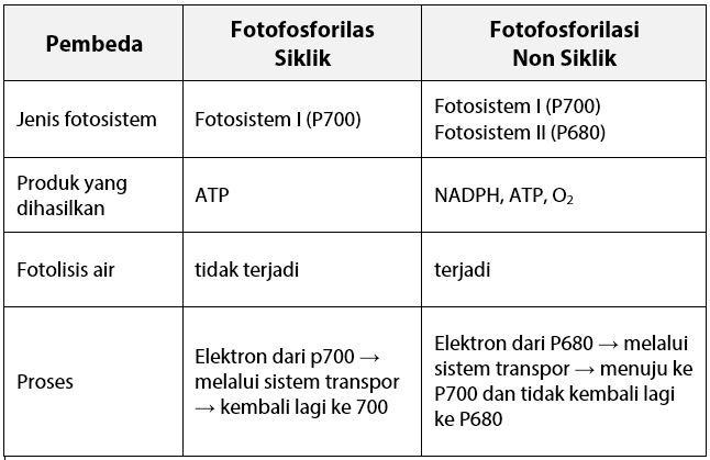 Perbedaan Fotofosforilasi Non Siklik dan Siklik