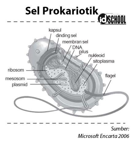 Struktur Tubuh Sel Prokariotik