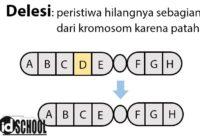 Kelainan Struktur Kromosom - Delesi