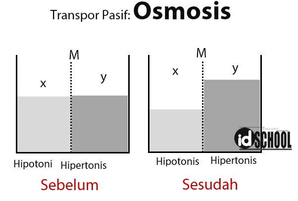 Peristiwa Osmosis sebagai Transpor Pasif