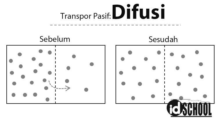 Transpor Pasif - Difusi