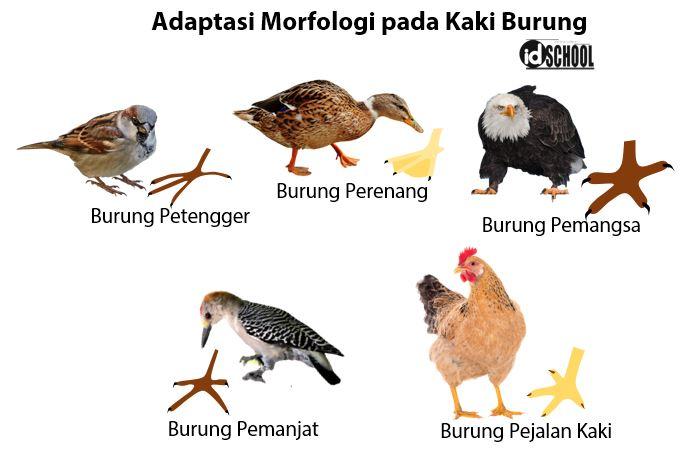 Adaptasi Morfologi pada Hewan - Bentuk Kaki Burung