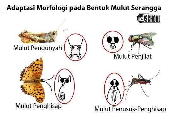 Contoh Adaptasi Morfologi pada Hewan Terdapat pada Bentuk Mulut Serangga