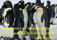 Cara Adaptasi Penguin agar Dapat Hidup di Daerah Kutub