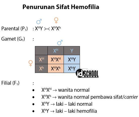 Penurunan Sifat Hemofilia