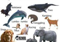 Cara Perkembangbiakan Hewan Secara Generatif Melalui Vivipar