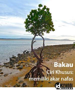 Ciri Khusus Pohon Bakau