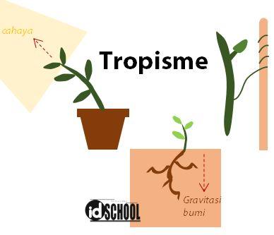 Gerak Tropisme