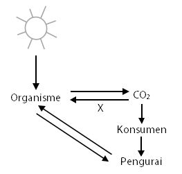 Contoh Soal Daur Karbon dan Daur Oksigen