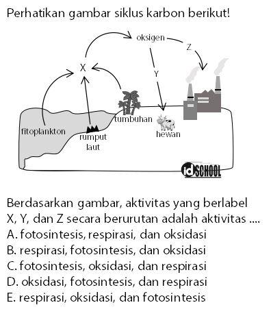 Contoh Soal Daur Karbon