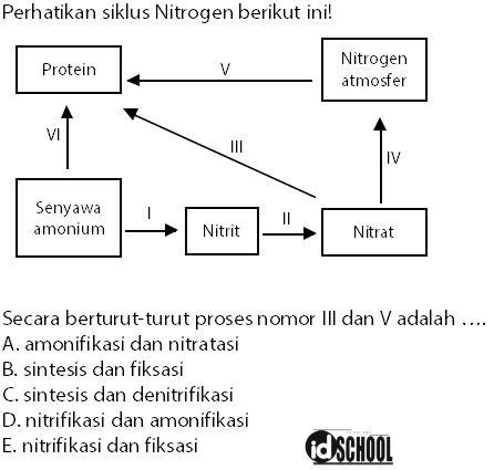 Contoh Soal Daur Nitrogen dan Pembahasannya