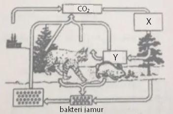 Soal Daur Hidup Karbon