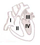 Contoh Soal Bagian-Bagian Jantung