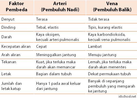 Tabel Perbedaan Arteri dan Vena