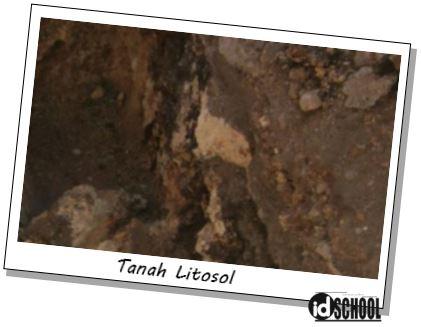 Tanah Litosol