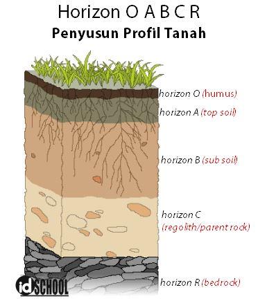 5 Horizon Penyusun Profil Tanah