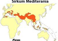 Rangkaian Jalur Sirkum Mediterania