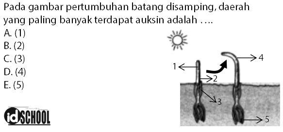 Contoh Soal Fungsi Hormon Auksin
