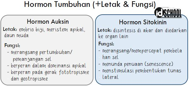 Letak dan Fungsi Hormon Tumbuhan